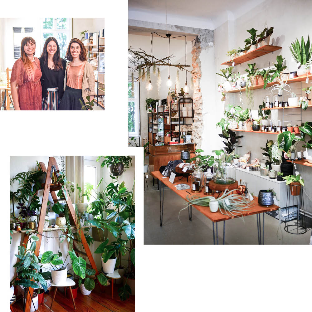 PLANT CIRCLE — AN OASIS FOR EXOTIC PLANTS AND WORKSHOPS