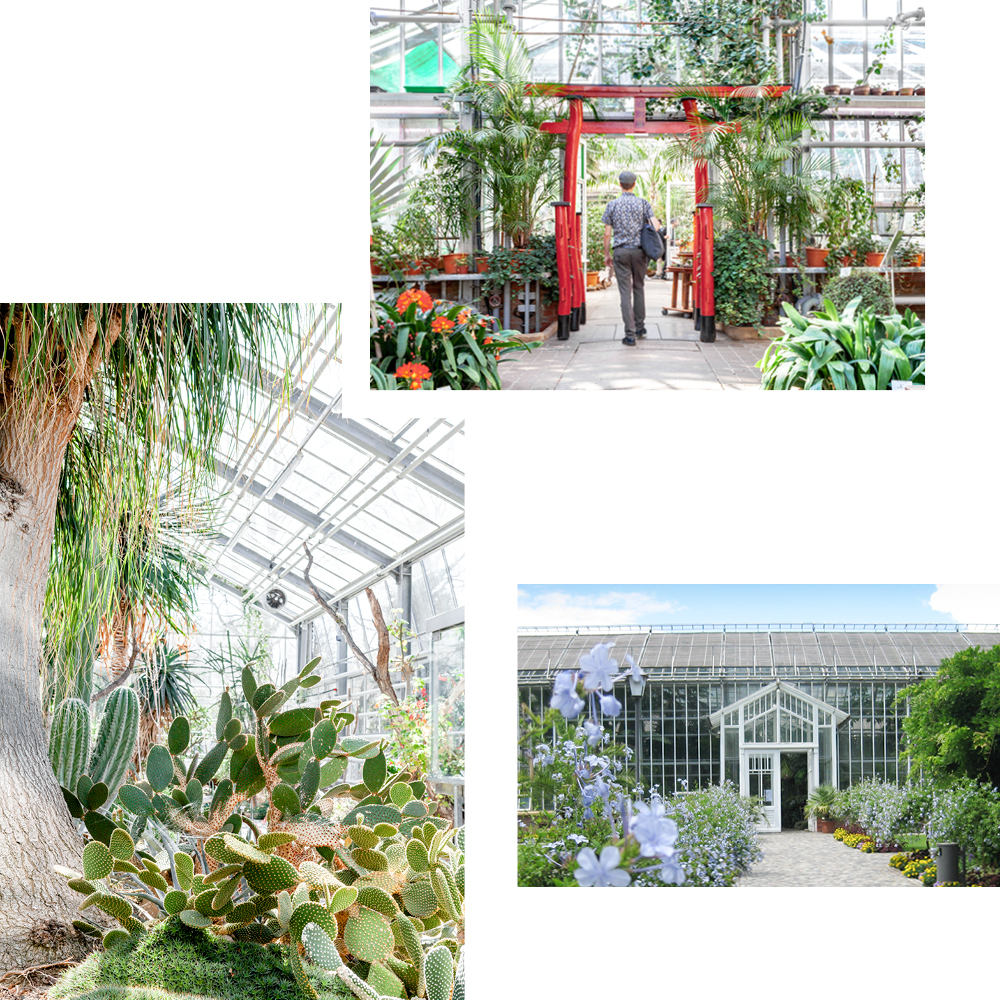 POTSDAM BOTANICAL GARDENS: FROM PRICKLY CACTI TO DELICATE ORCHIDS