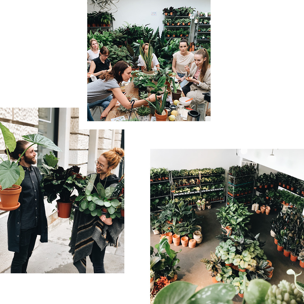 JUNGLE FEVER WITH BERGAMOTTE: PLANT HUNTING AT THE XXL POP-UP SHOP