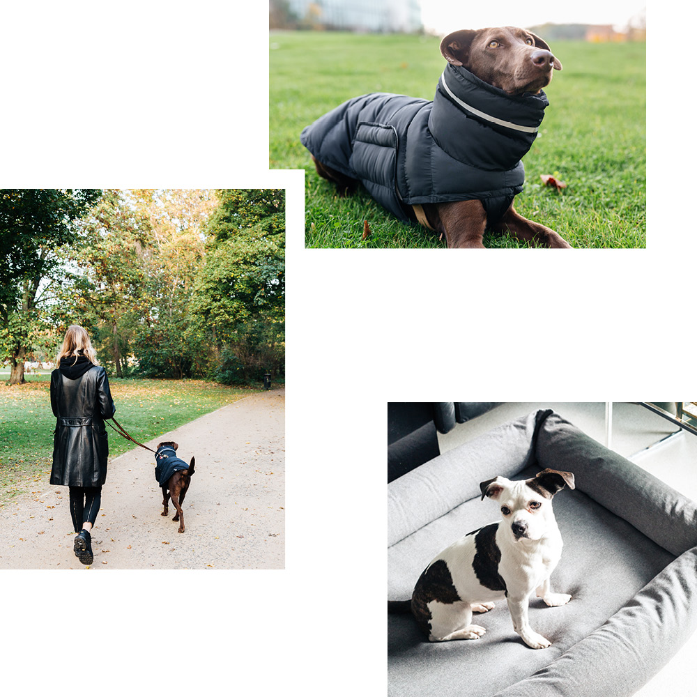 CLOUD7: THE ONLINE BOUTIQUE FOR THE FINEST IN DOG ACCESSORIES