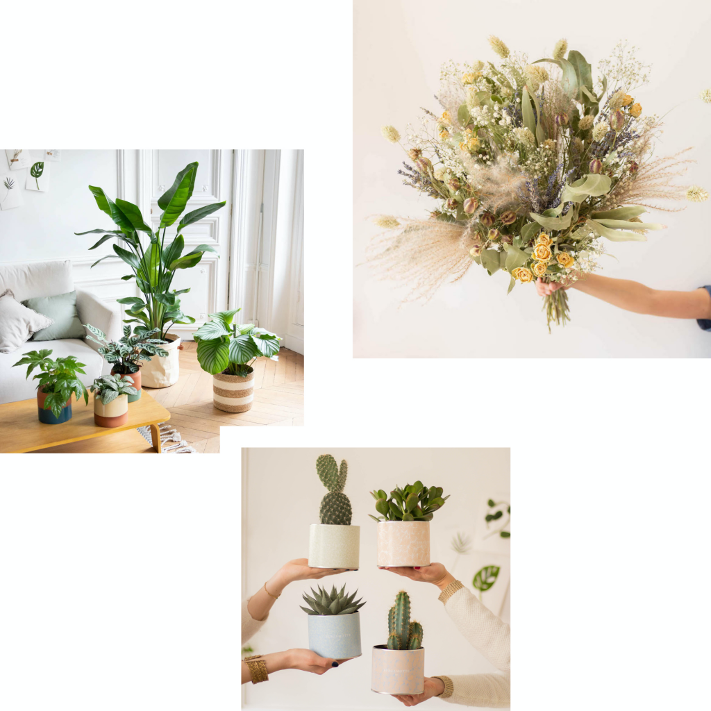 SEND A FRESH SURPRISE WITH BEAUTIFUL BOUQUETS AND PLANTS FROM BERGAMOTTE