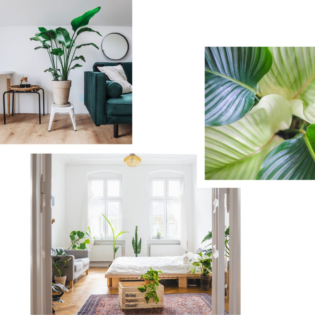 BOSQUE — SUSTAINABLE READY-POTTED HOUSEPLANTS DELIVERED TO YOUR DOOR