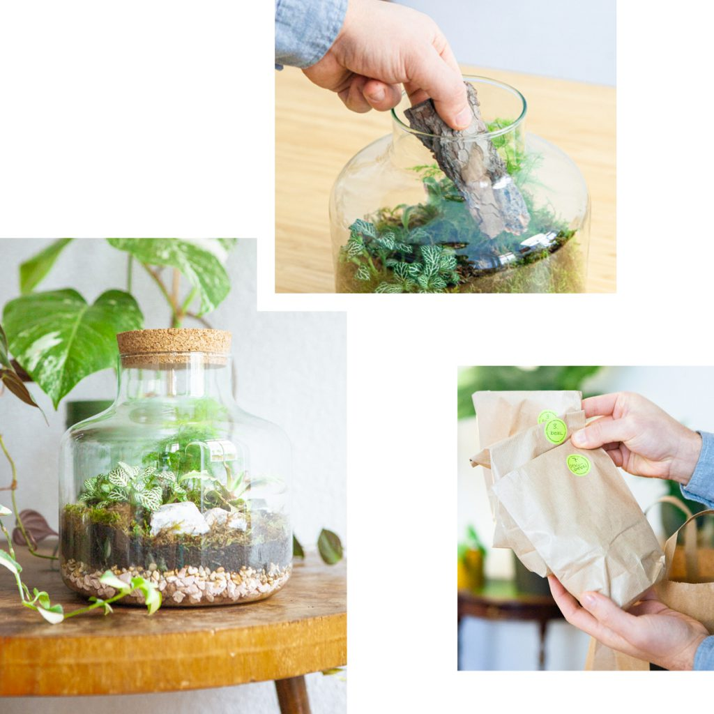 TERRARIUM KIT FROM THE BOTANICAL ROOM — CREATE YOUR OWN MINI JUNGLE AT HOME