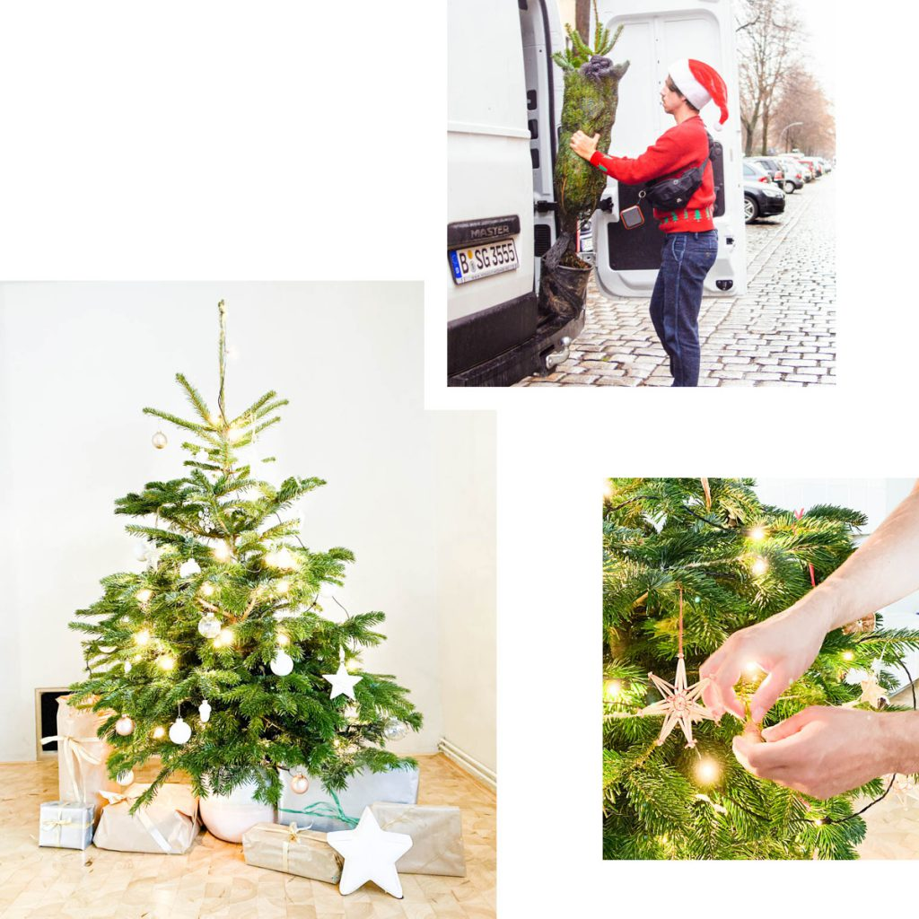 WUNDERTREE: SUSTAINABLE POTTED CHRISTMAS TREES DELIVERED TO YOUR DOOR