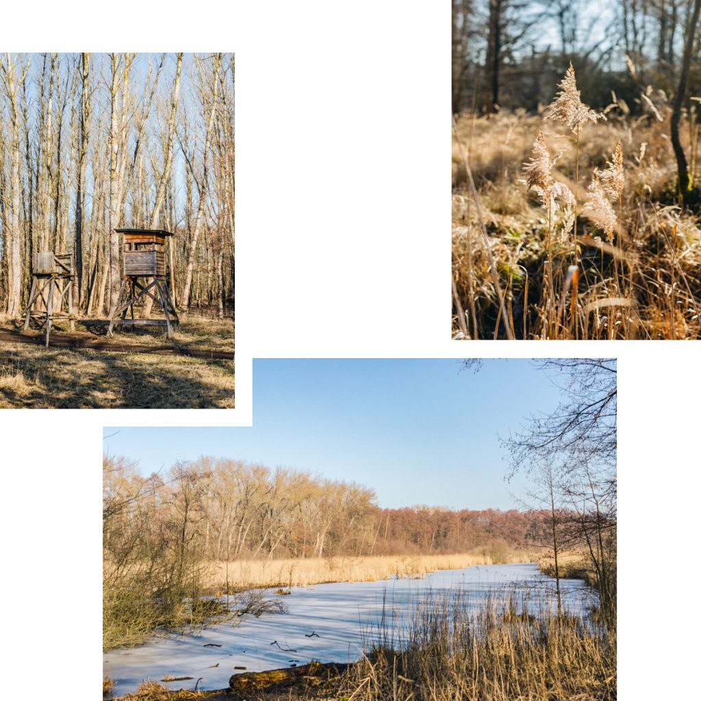 BUCHER FORST: NATURE-FILLED HAVEN FOR PEACEFUL WALKS THROUGH MEADOWS, WOODS AND MARSHES