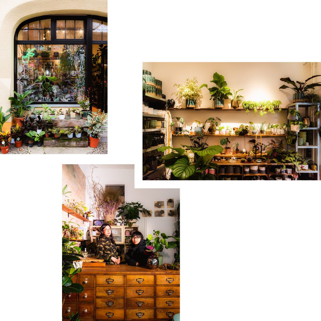 GETTING THE JUNGLE LOOK AT PILEA LIVING — HOUSEPLANT SHOP FOR TROPICAL SPECIES AND HANDMADE POTS