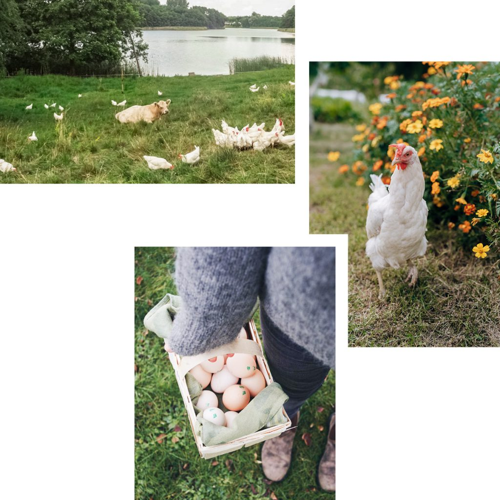 HAPPY EASTER WITH HAPPY HENS — REGIONAL EGGS AND CHICKEN SPONSORSHIPS FROM BRANDENBURG'S WEIDE EI